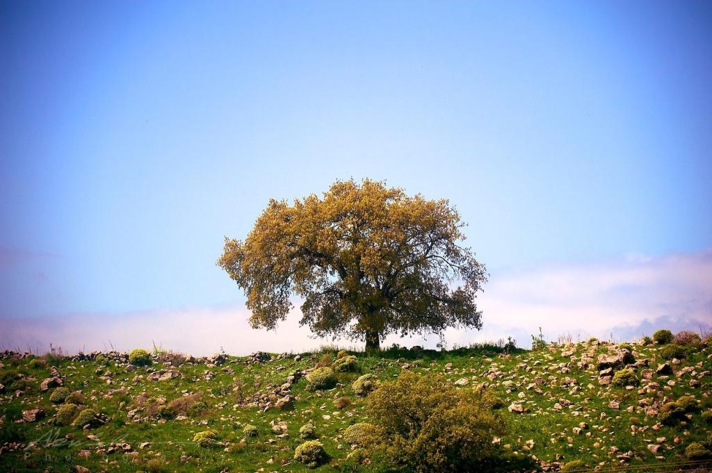 Israel March 2011 54