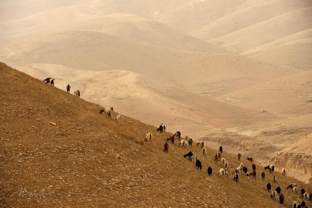 Israel March 2011 42