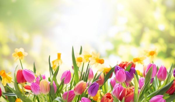 spring-59