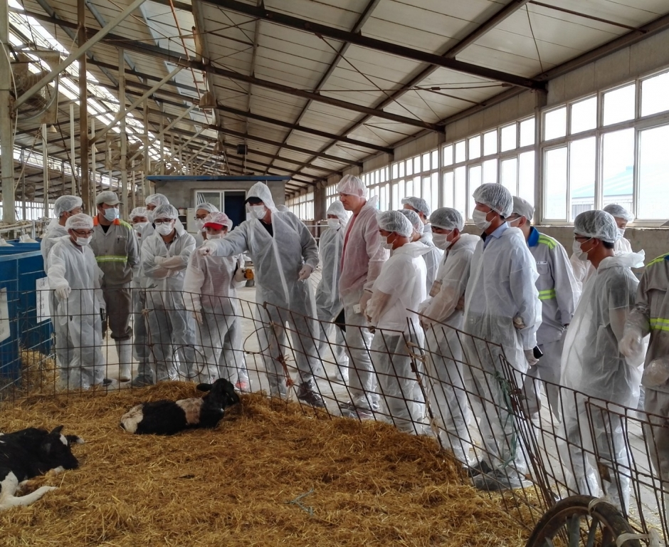 土左牧场犊牛培育技术交流