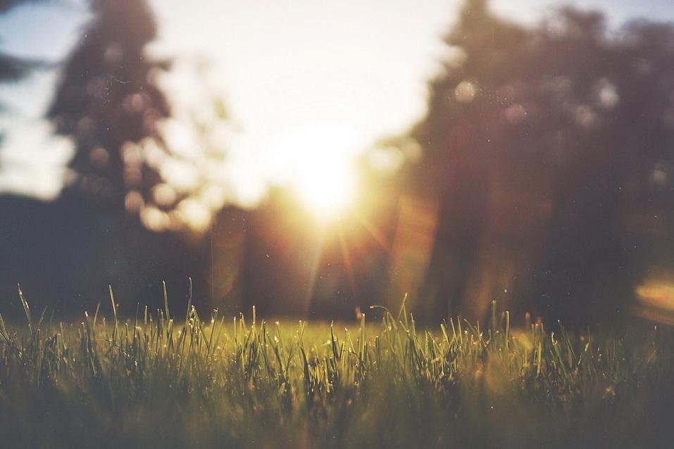 grass-455753_1280_调整大小