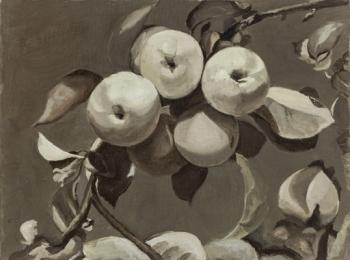 苹果树 40x30  2008年-