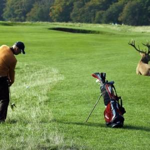 丹麦-哥本哈根Kobenhavn Golf