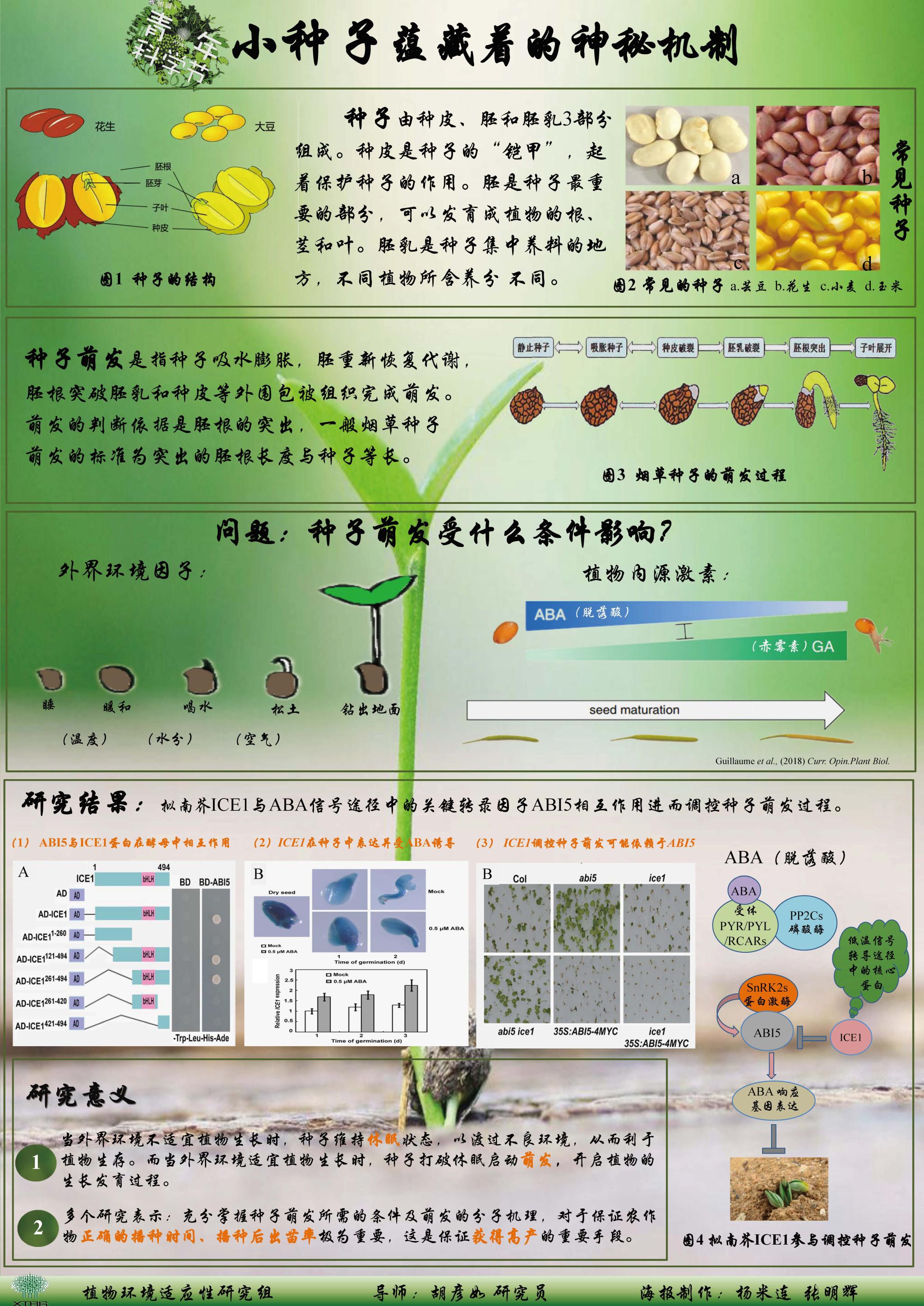 小种子蕴藏着的神秘机制(作者:杨米连&张明辉)
