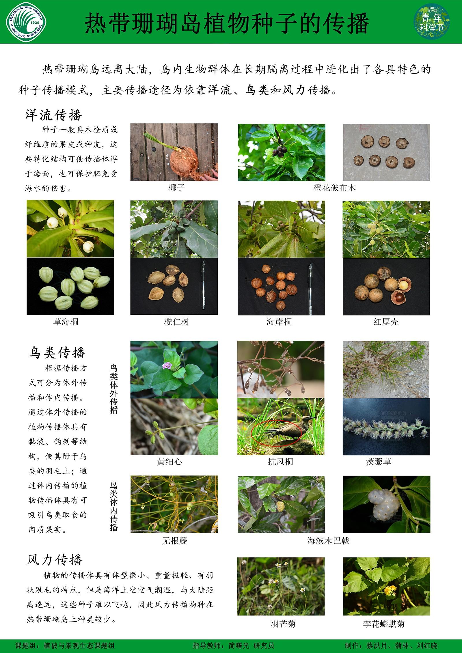 蔡洪月-景观生态-珊瑚岛植被恢复